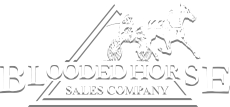 Blooded Horse Sales